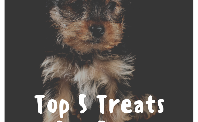 Top 5 Treats For Your Dog